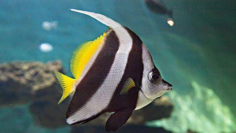 Aquarium Le 7e Continent